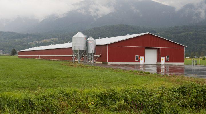 Rainwater Harvesting for Livestock